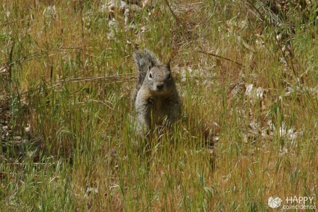 HC-SF-Yosemite-park2