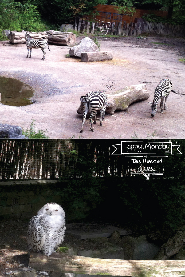 HC-happy-monday+at-the-zoo